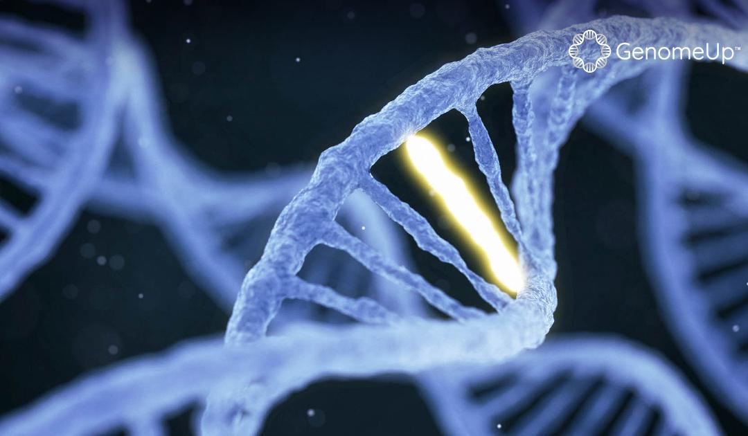 Le mutazioni genetiche potrebbero predire la risposta al trapianto allogenico